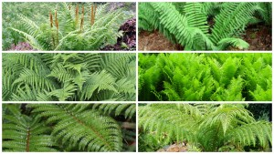 collection of large ferns