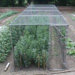 heavy duty walk in fruit cage