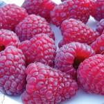 delicious joan j raspberries